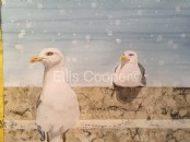 Herring Gulls on Wall - Original Watercolour