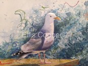 Lone Herring Gull - Original Watercolour